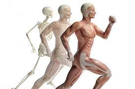 musculoskeletal future